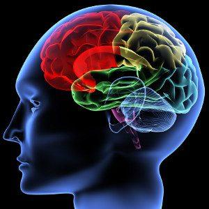 Cervello, Neuroni Specchio. - Immagine: © V. Yakobchuk - Fotolia.com -