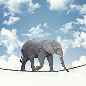Adolescenza: L'età degli Elefanti in Equilibrio Su un Filo. -Immagine: © tiero - Fotolia.com