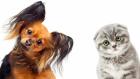 Personalità: che tipo sei? Cane o Gatto?
