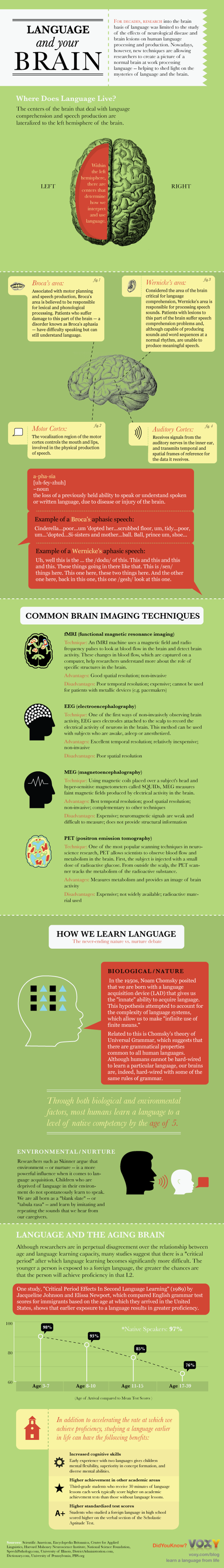 Language and Brain - Infographics - Immagine: www.voxyblog.com