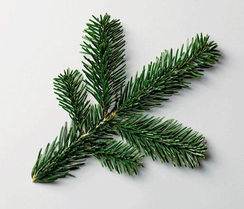 Ursus-Wehrli-The-Art-of-Clean-Up-pine1