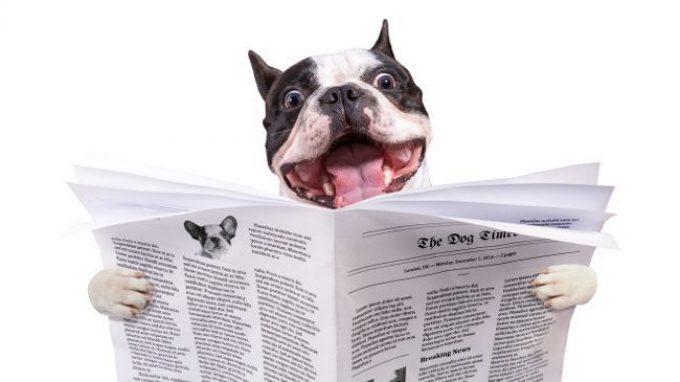 Dognition: il website per scoprire quanto è intelligente il nostro cane