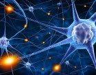 """Una """"spugna"""" per coltivare neuroni: l'evoluzione dei neuroni in vitro dal 2D al 3D"""