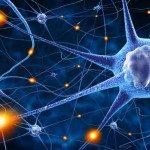 Immagine: Fotolia_78707112_Una spugna per coltivare neuroni l'evoluzione dei neuroni in vitro dal 2D al 3D