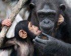 Depressione: l'impatto della sertralina sul cervello dei primati
