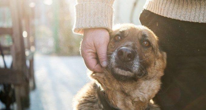 Terapia Assistita con gli animali: una nuova esperienza al carcere di San Vittore