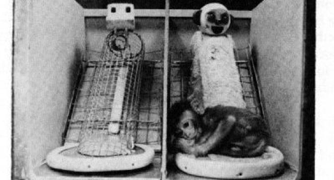 esperimento di Harlow