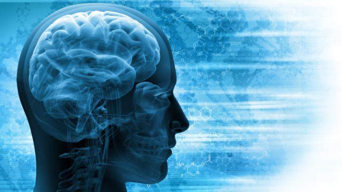 La scoperta dell'atlante semantico del nostro cervello