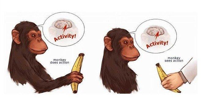 Neuroni specchio 1992 i grandi esperimenti di psicologia - Neuroni specchio e autismo ...