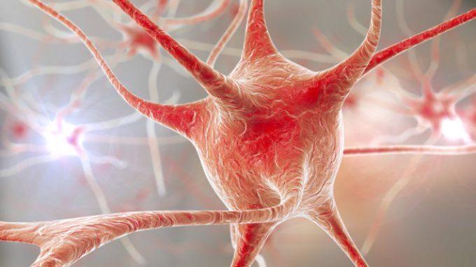 Neuroni simili ma non uguali: ciò che ci rende unici
