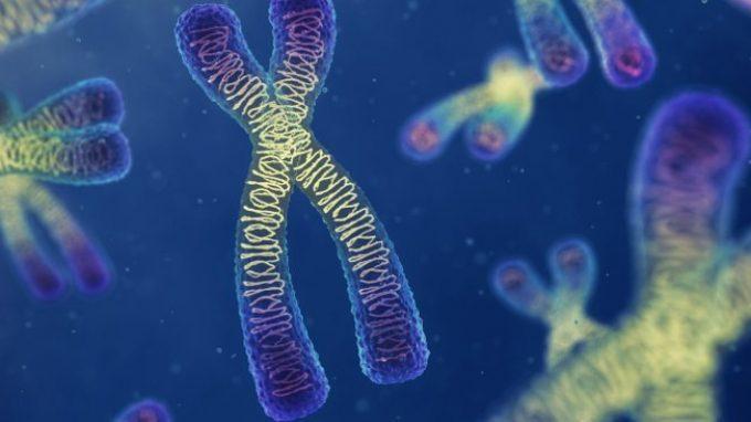Gli effetti degli eventi avversi sul patrimonio genetico dell'individuo