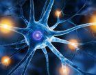 Il neurone: l'anatomia e i diversi tipi della cellula nervosa – Introduzione alla psicologia