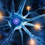 Neurone: anatomia e tipologie di neuroni - Introduzione alla Psicologia