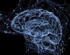 Tecnologia organoide: un nuovo metodo per il rilevamento di malfunzionamenti cerebrali. Lo studio degli organoidi cerebrali