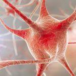 Orientamento spaziale: scoperto un nuovo neurone che consente di orientarsi