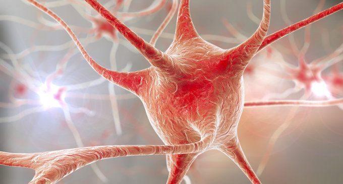 """La scoperta di un neurone """"di quartiere"""" che favorisce l'orientamento"""