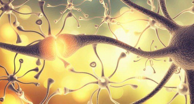 Quei neuroni che aiutano a distinguere la realtà dall'immaginazione
