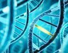 Nuove mutazioni genetiche inciderebbero sull'autismo