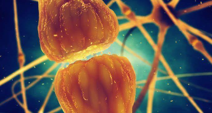 Le sinapsi: che cosa sono e le tipologie