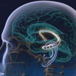 Il cervello può sopprimere pensieri intrusivi e memorie spontanee