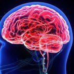 Neurobiologia delle emozioni: le strutture neurali implicate nella regolazione emotiva