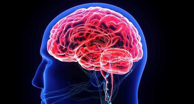 circuiti della rabbia a livello neuroanatomico