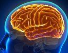 Una nuova comunicazione neuronale importante per la memoria