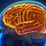 Scoperto un nuovo meccanismo neuronale implicato nella memoria