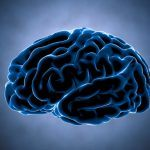 La corteccia somatosensoriale dagli strati cellulari alle sue funzioni - Psicologia