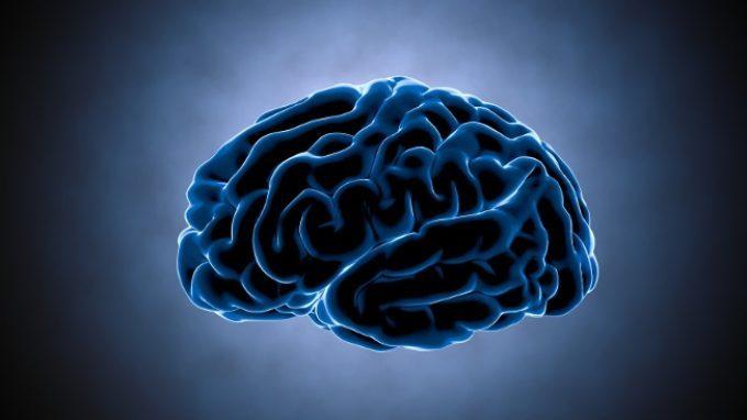 La corteccia somatosensoriale – Introduzione alla Psicologia