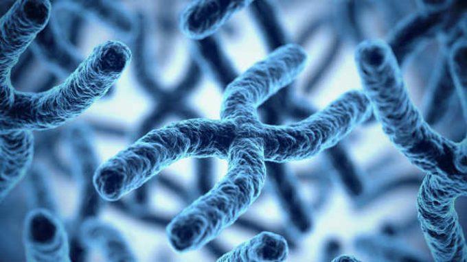 Anche per i geni il tempo è importante – Ritmi circadiani e la trascrizione del DNA