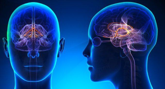 Il sistema limbico – Introduzione alla Psicologia