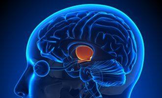 Il talamo: anatomia e funzioni – Introduzione alla Psicologia
