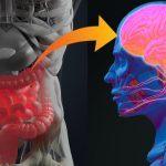 Gli effetti della flora batterica sul nostro comportamento - Neuroscienze