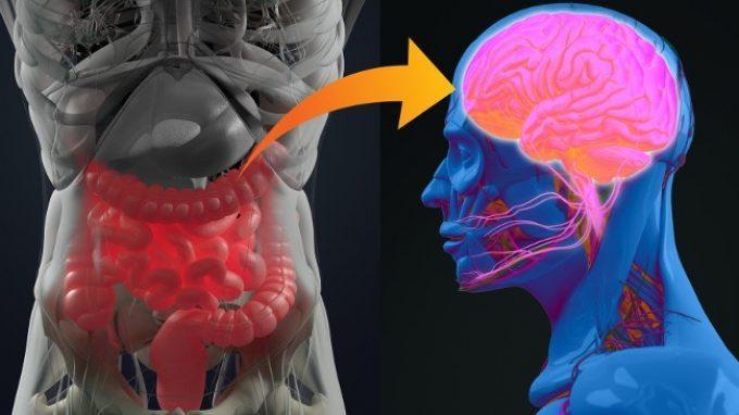 Perché la flora batterica influenza il nostro comportamento?