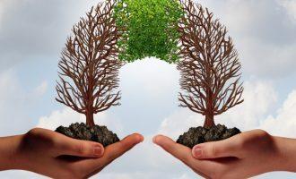 Cooperazione: tra i successi e i fallimenti del comportamento cooperativo
