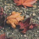 Disturbo Bipolare e decadimento cognitivo: correlazioni con la demenza