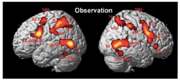 Neuroni specchio dalla scoperta al dibattito scientifico sul funzionamento immagine