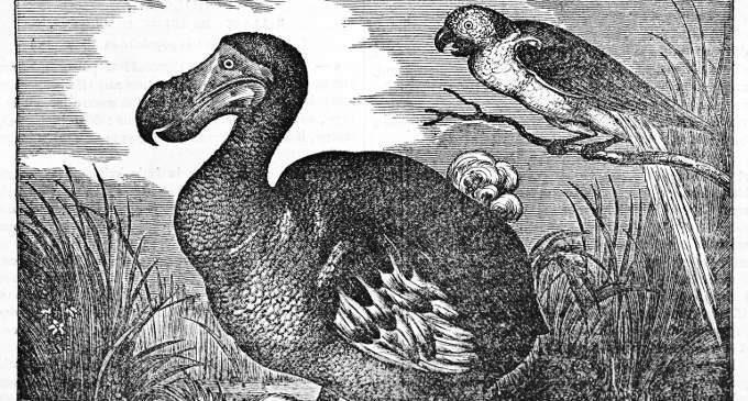 Una psicoterapia vale l'altra? Non chiedetelo al dodo