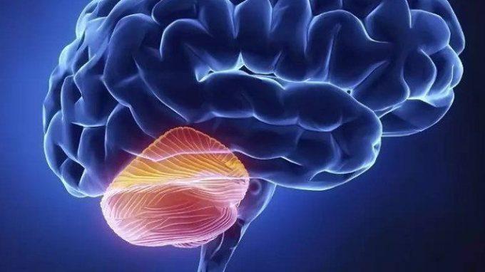 Il cervelletto – Introduzione alla Psicologia