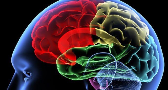 Il cervello degli assassini