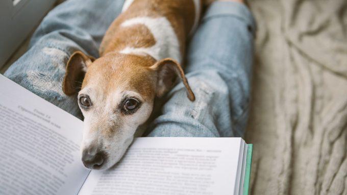 Come gli animali domestici aiutano ad affrontare la perdita di una persona cara