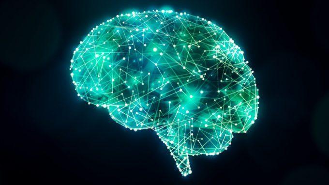 Il cervello flessibile