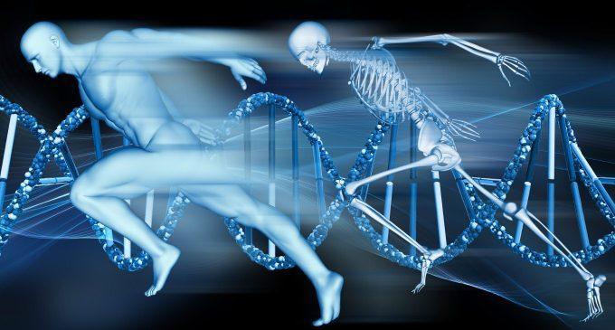 Un altro organo per regolare le reazioni di stress: le ossa!