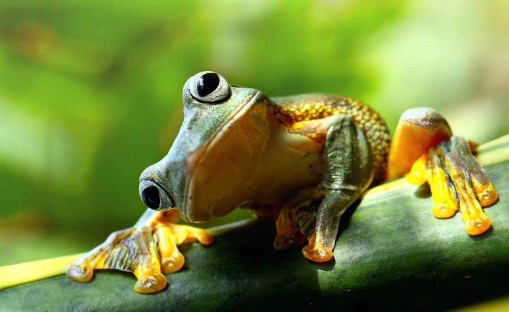 Il principio della rana bollita IMM 1