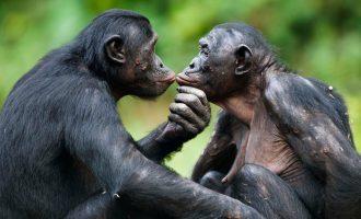 Sesso e cooperatività inter-individuale: un modello animale