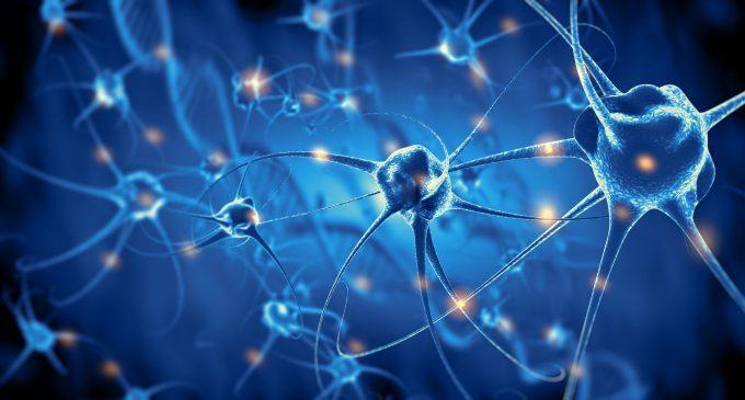 I meccanismi neurobiologici della Terapia Metacognitiva