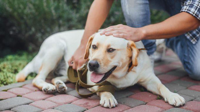 La AAT: una ricerca esplorativa sull'efficacia di un programma di terapia assistita da cani negli adulti con disturbo dello spettro autistico.