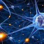 Neurone: la sua scoperta e l'evoluzione delle teorie sul tessuto nervoso