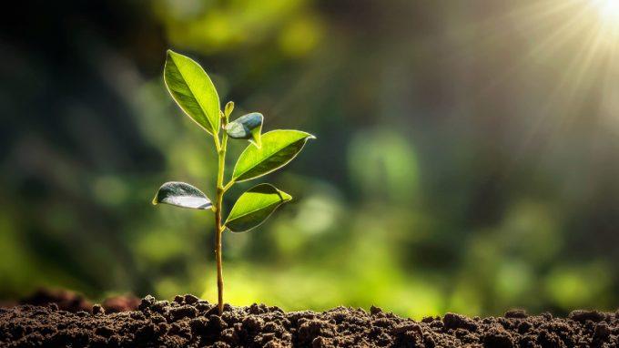La mente delle piante